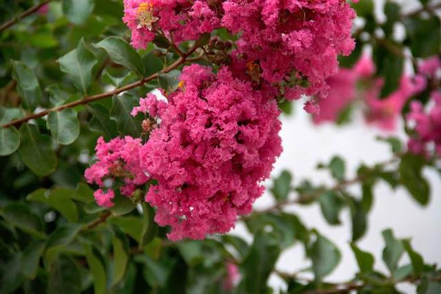 Arbol florecido