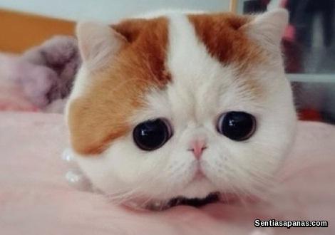 Gambar Kucing Yang Comel Di Dunia Republika Rss