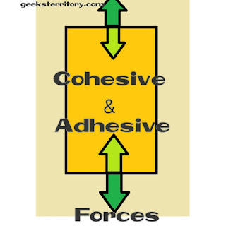 Cohesive vs adhesive force