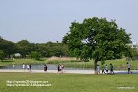 新緑の公園写真