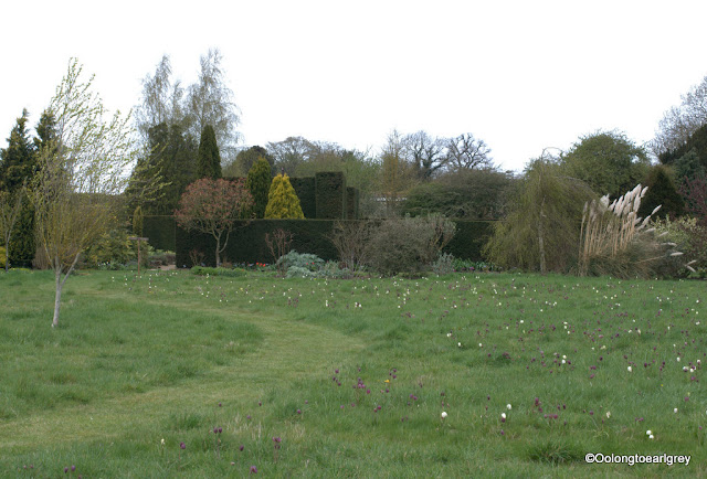Meadow filled with Snakeshead fritillaries, Waterperry Garden, England