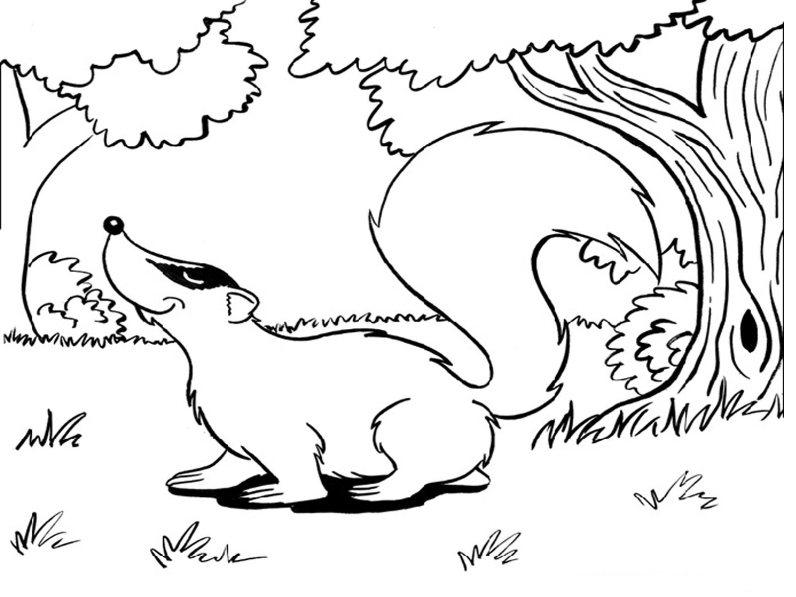 Animales Para Colorear: Badger Coloring Pages Realistic