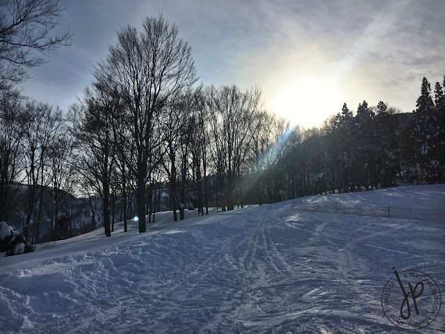 sunset on ski trail, trees, thick snow
