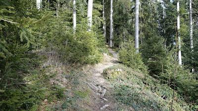 Wurzeliger Waldpfad