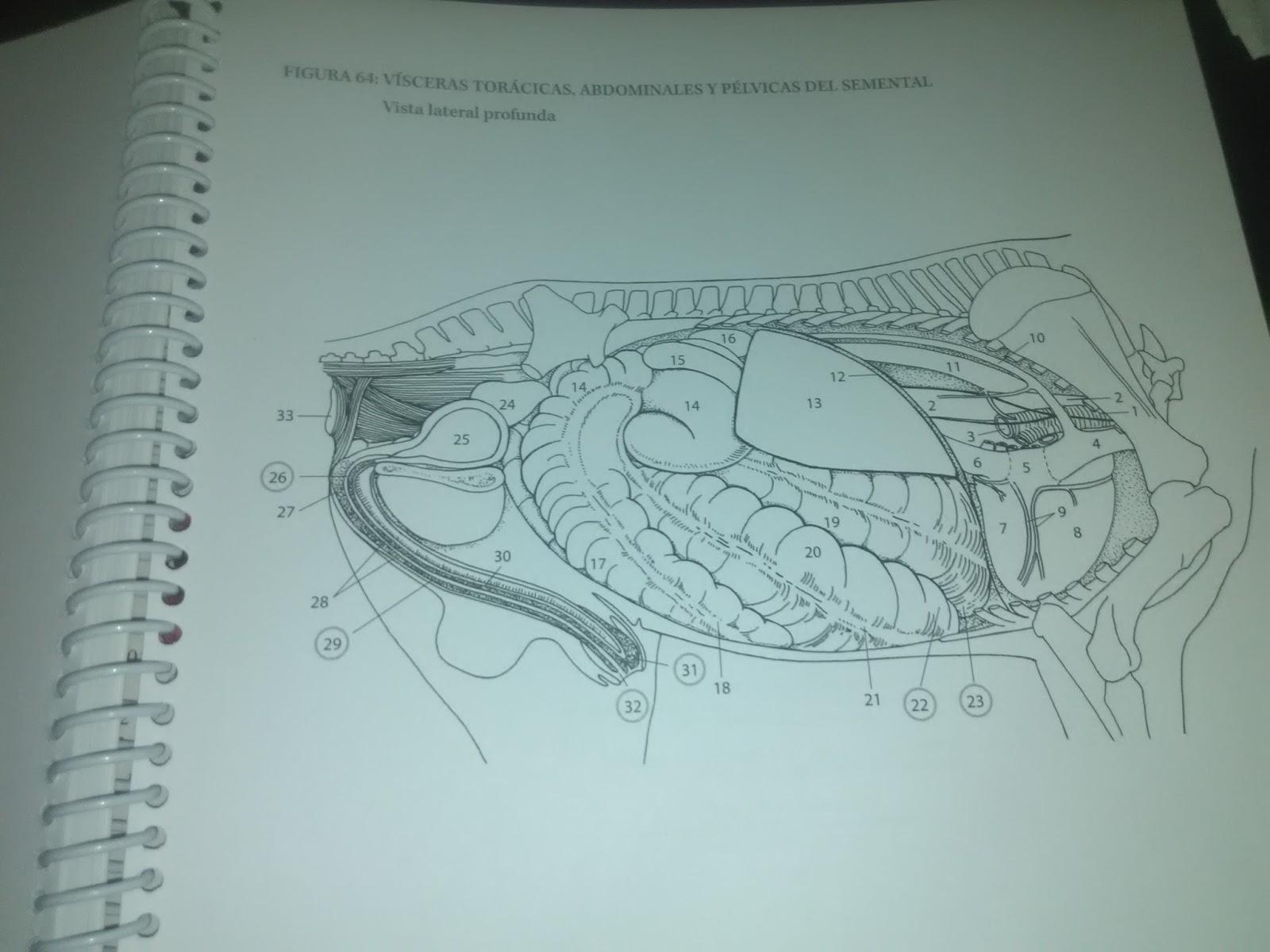 Magnífico Libro Para Colorear De Anatomía Kapit Elaboración ...
