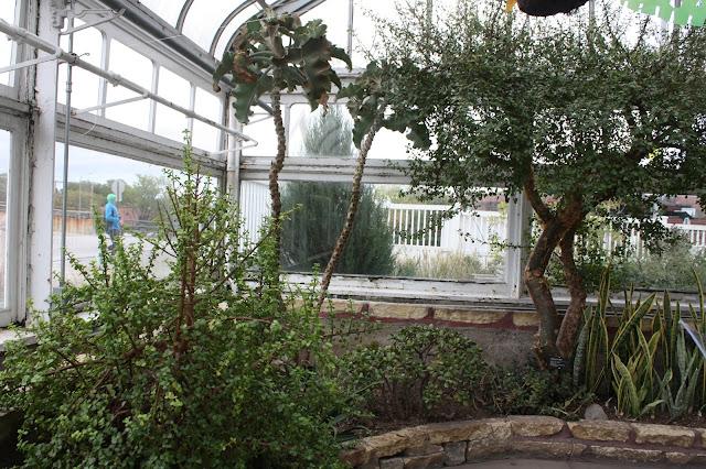 Arid greenhouse at the Oak Park Conservatory