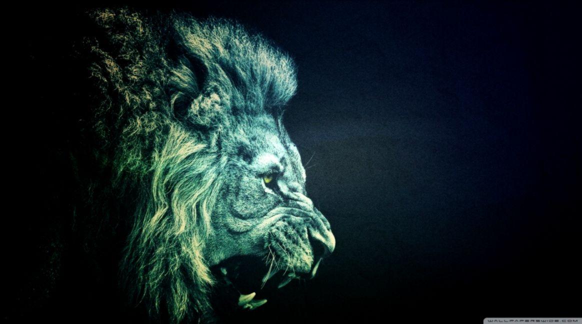 Lion Roar Wallpaper Hd Sizehd
