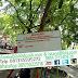 Jual Bibit Pohon Bintaro Harga Murah