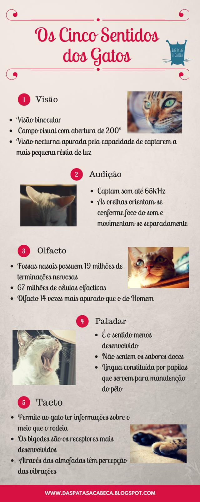 infografia sentidos gatos