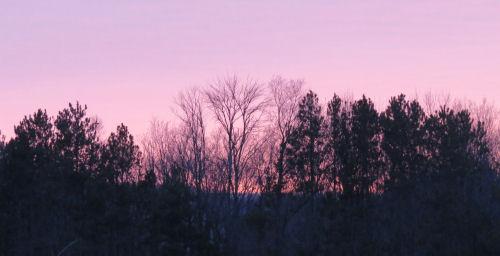 pink dusk