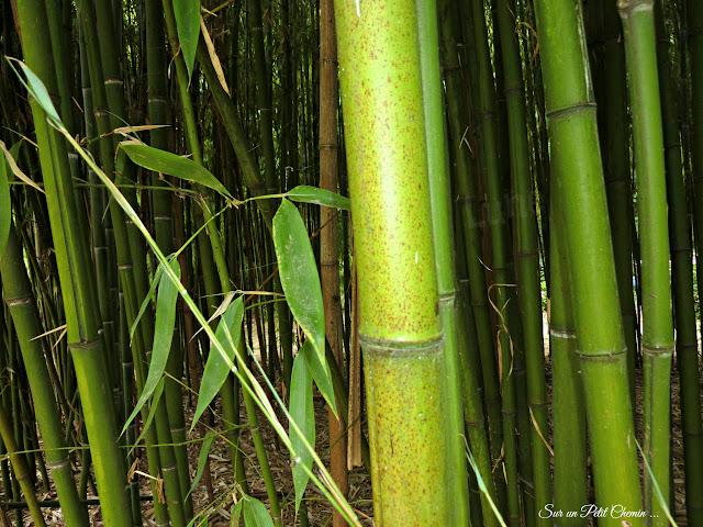 Bambous et Lotus