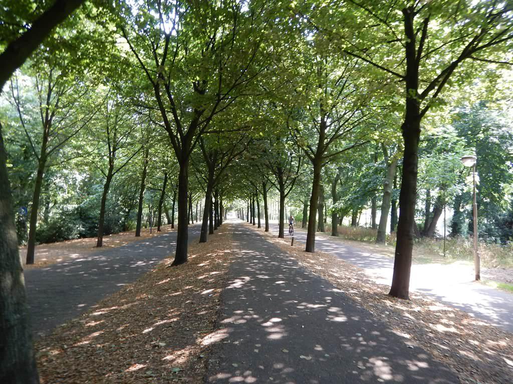 Onde correr em Roterdã