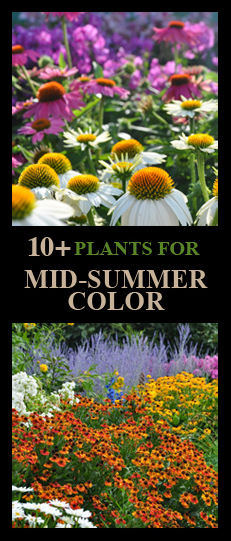 10+ Plants for Mid-Summer Color