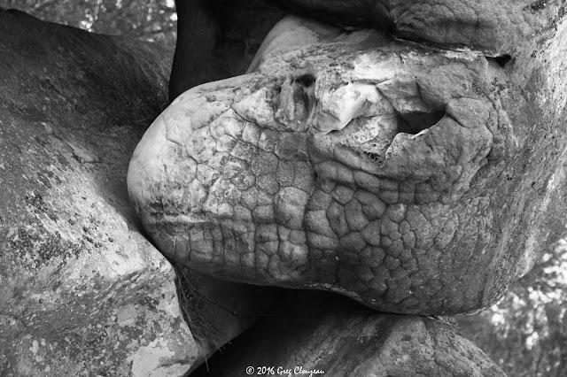 Tête de T-rex, Gorge aux Chats, Trois Pignons, (C) 2016 Greg Clouzeau