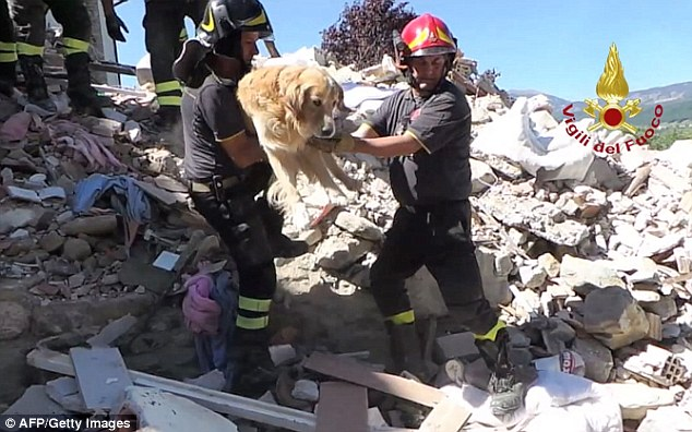 Dog Rescued In October Italy Earthquake
