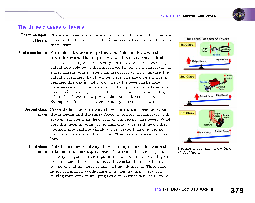 Adam s Blog   Free science worksheets primary students Lab report