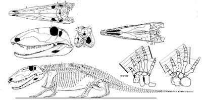 permian vertebrates