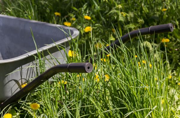 kottikärryt pitkä nurmikko puutarha puutarhanhoito voikukkapelto voikukka