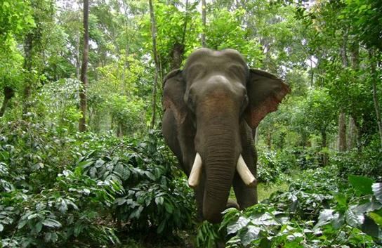 chinese elephant man
