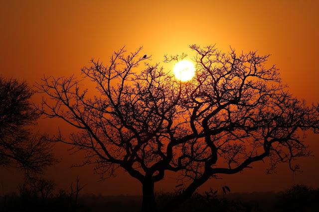 VIAGEM DE OVERLAND - Parte 5 - De Joanesburgo ao Parque Nacional de Kruger
