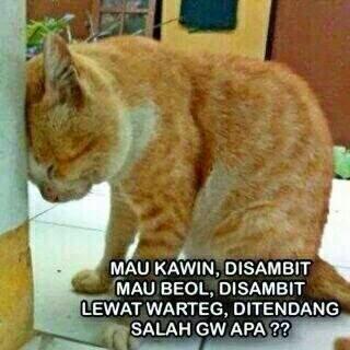 Ngadubanteng Kumpulan Meme Kucing Lucu