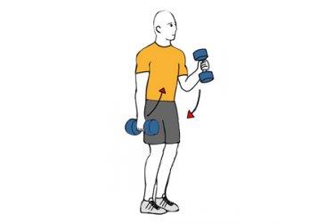 De biceps con curl mancuernas alterno