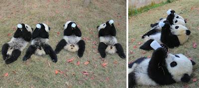 Lugar en china para preservar osos panda