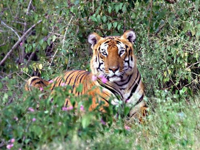 Three held with tiger teeth from Bhutan
