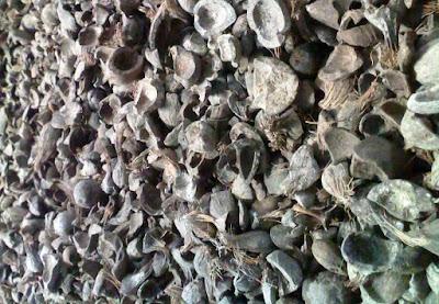 cangkang kelapa sawit