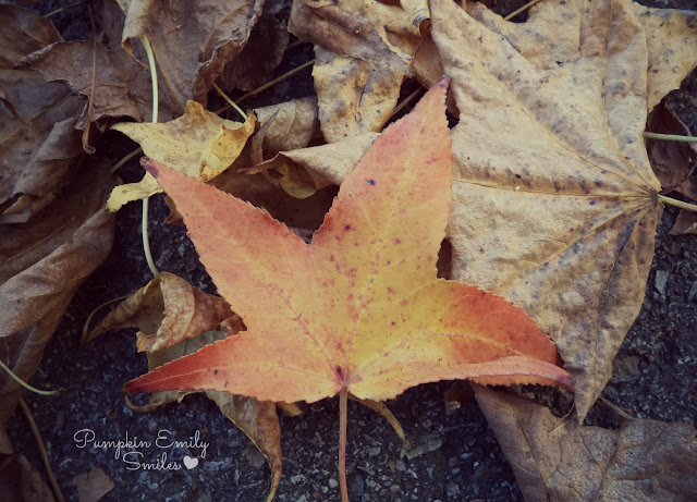 A orange and yellow leaf