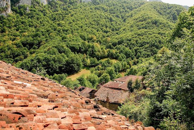Viboli. Parque Natural de Ponga Asturias.