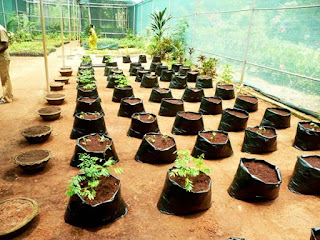 gardening ideas in tamil