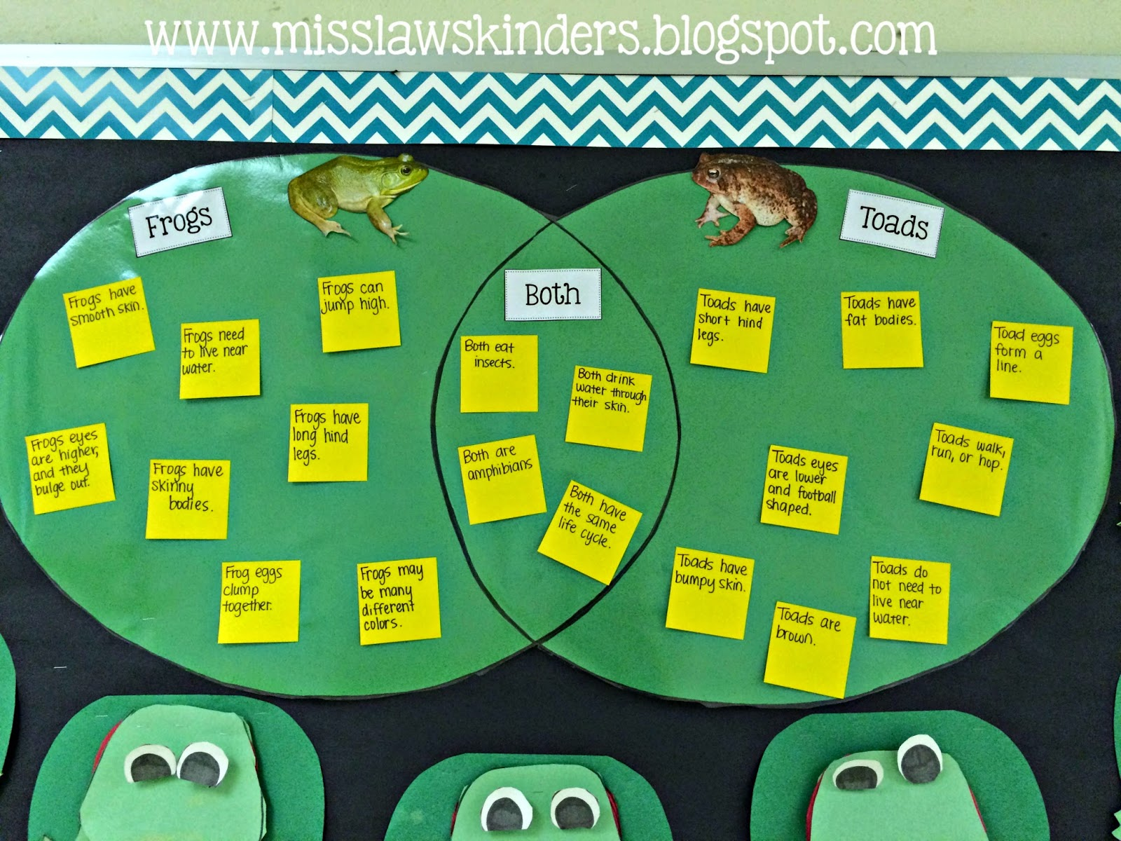 Miss Law S Kinders Oviparous Animal Life Cycles Day 2