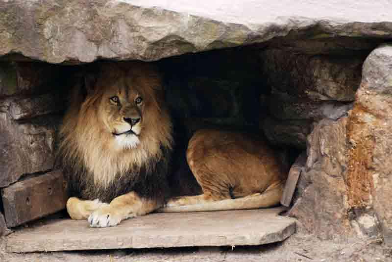 twenty-seven: Rain, Fire, and Ferocious Lions