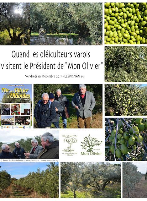 #mon olivier #oleiculteurs #olive #huile d'olive