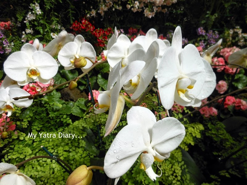 White Floral display at the Fitzroy Gardens conservatory, Melbourne Australia