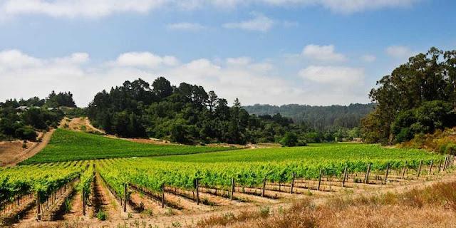 Vinícolas em Santa Bárbara County