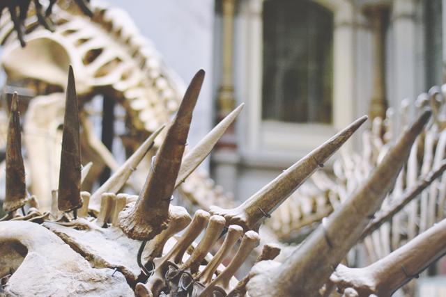 Kentrosaurus skeleton Berlin