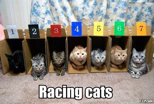 Funny Racing Cats in Boxes Joke Picture