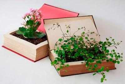 terarium buku pink
