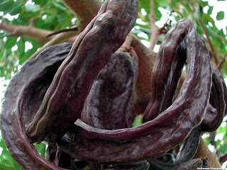 Carob fruit images wallpaper
