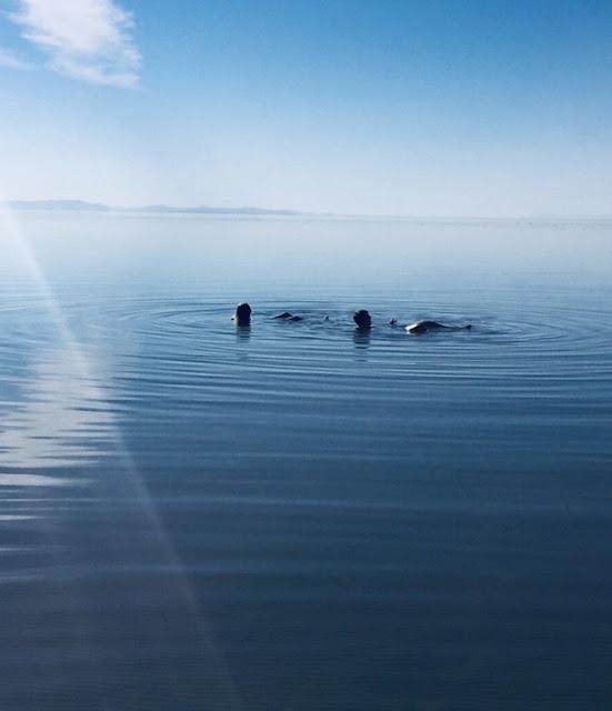 """Unsere Kinder Pascal und Angelina """"schwimmen"""" auf dem Wasser der Großen Salzseen bei Salt Lake City in Utah"""