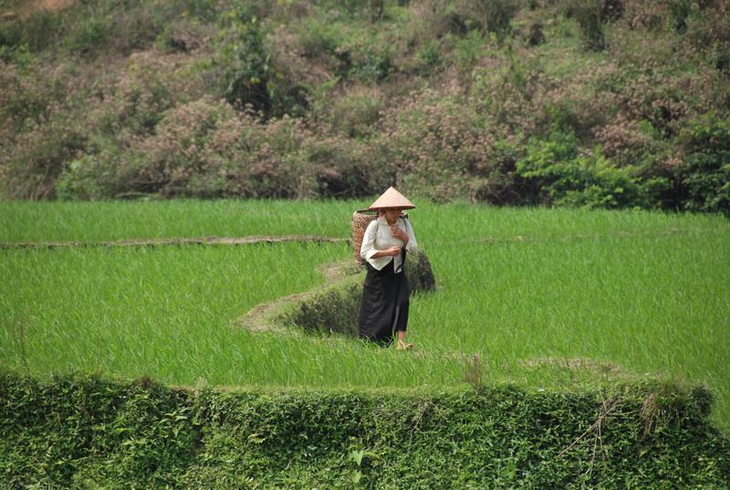 Tham quan đồi chè và ruộc bậc thang tại Nghĩa Lộ, Yên Bái