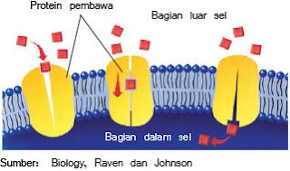 Gambar difusi terbantu(facilitated diffusion)