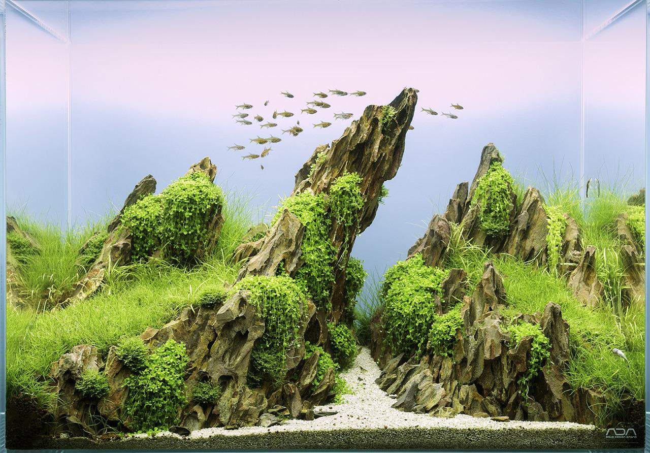 Bố cục hồ thủy sinh dùng đá Tiger