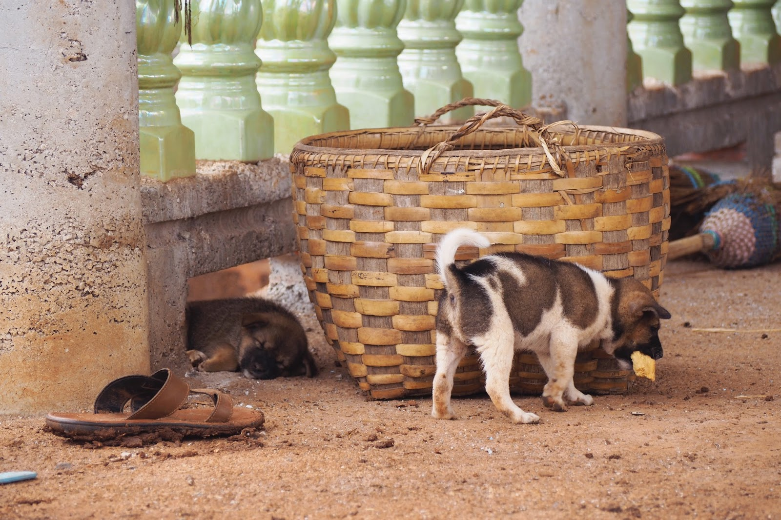 Puppies Indein Village, Inle Lake