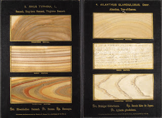 A set of rectangular wood grain samples on a black background.