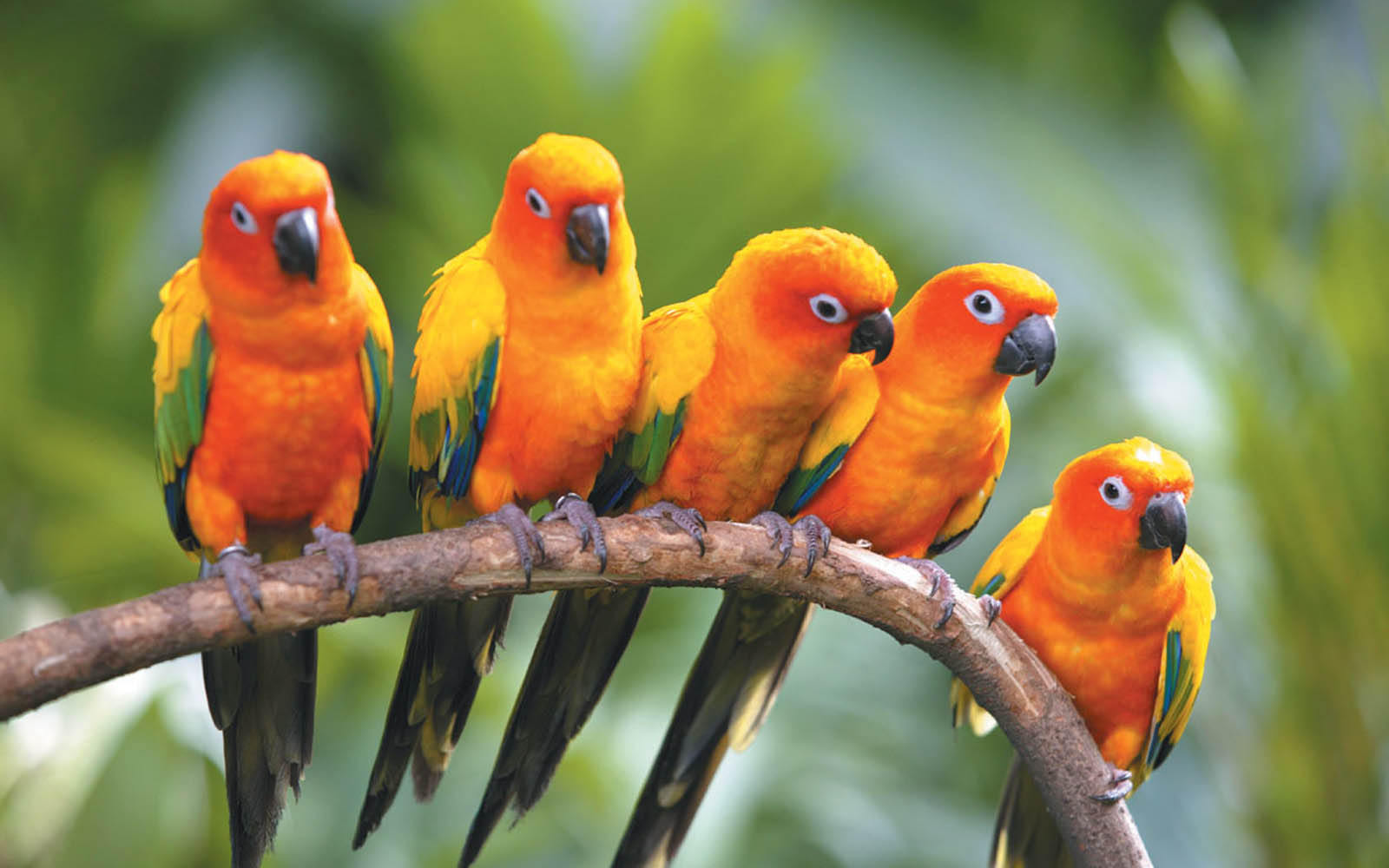 mp3 download free forever love birds wallpapers love birds