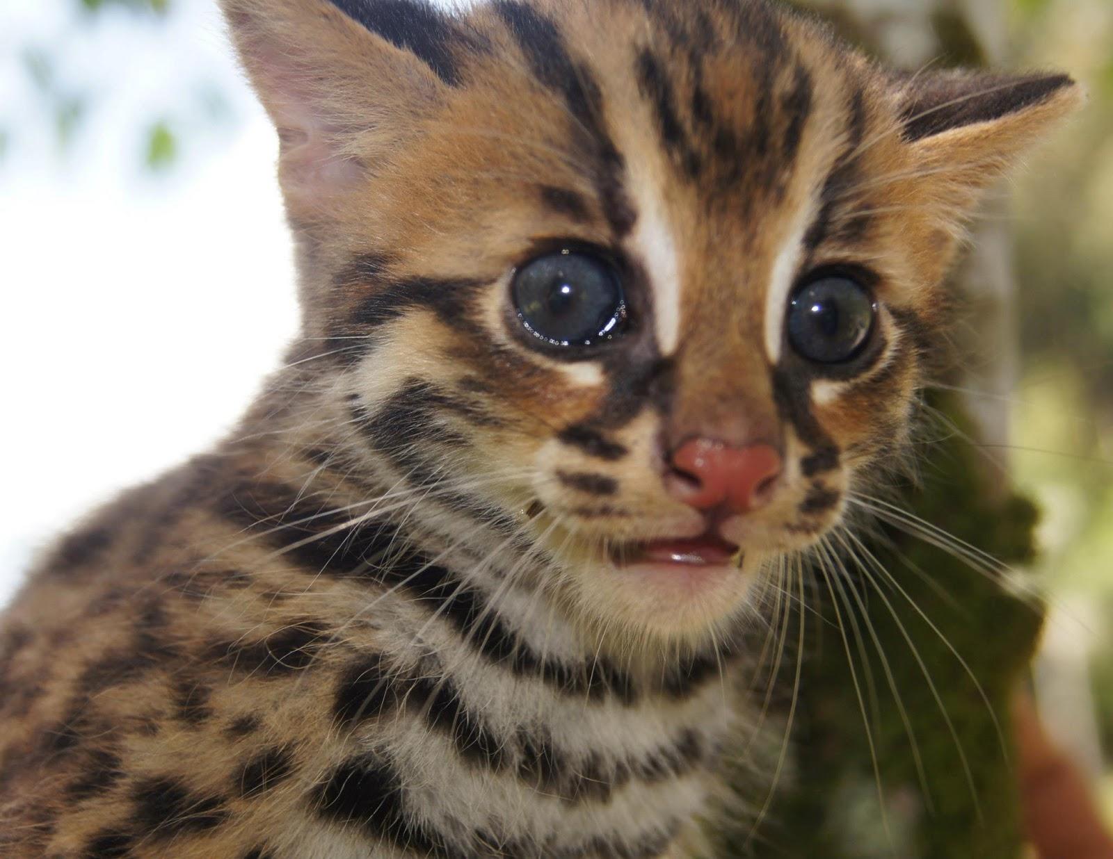 Wallpaper Kucing Terkejut Laman Husna Anak Kucing Batu