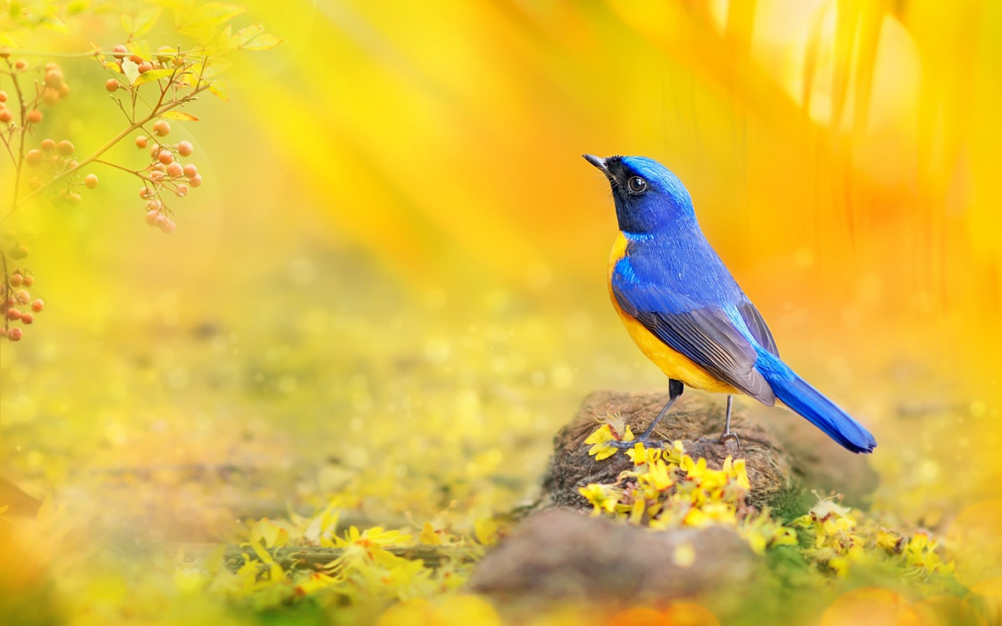 best 10+ hd animal wallpaper free download - 4k hd bollywood,nature